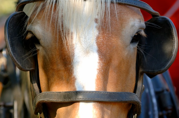 close-up photograph of horse with blinders