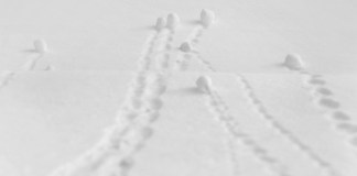 photograph of several snowballs at the bottom of hill with tracks trailing behind