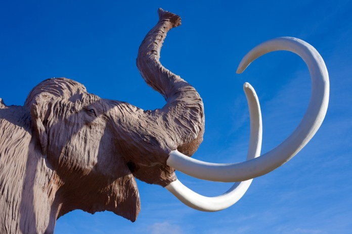 photograph of woolly mammoth sculpture