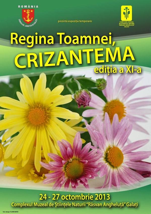 regina-toamnei-crizantema