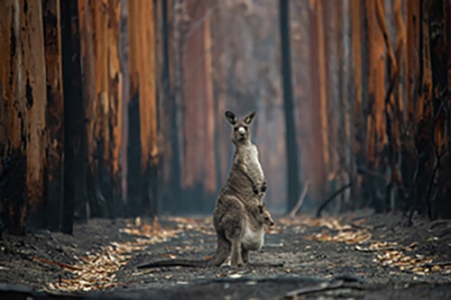 Ganador Categoría 'Man and Nature': Jo-Anne McArthur (Canadá) con 'Hope in a Burned Forest':