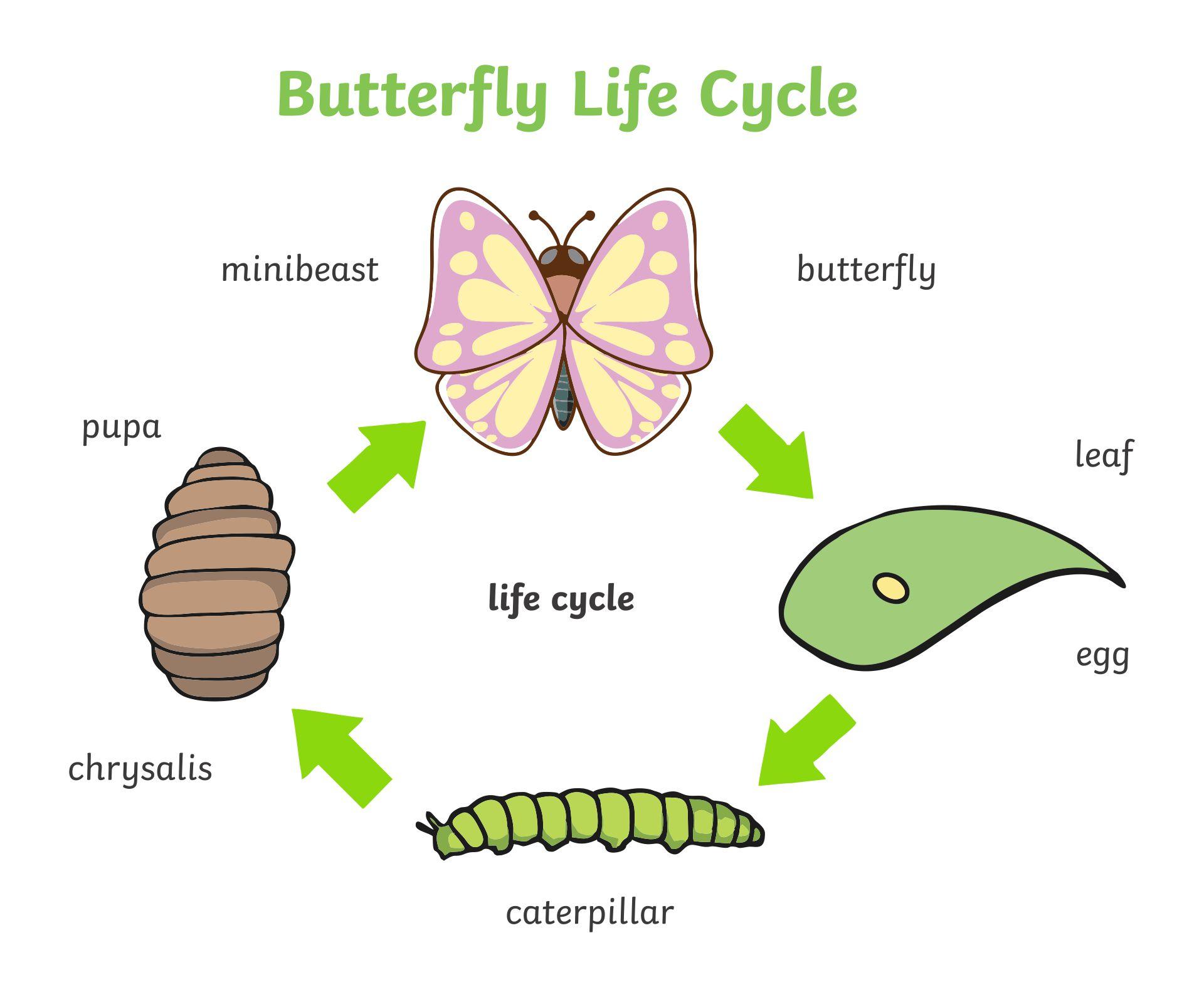 7 Best Images Of Caterpillar Dot Art Printables Do A Dot