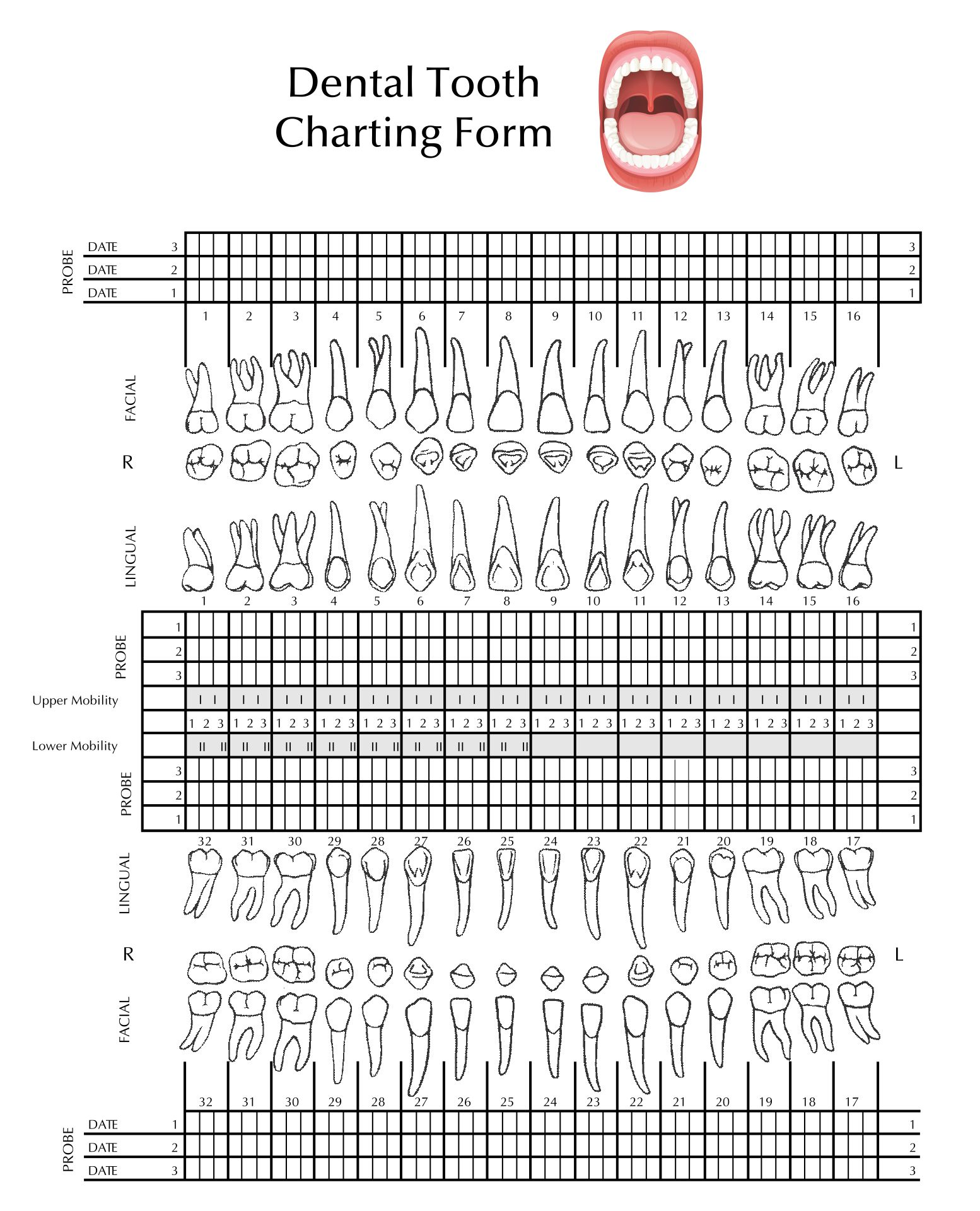 8 Best Images Of Tooth Chart Printable Full Sheet