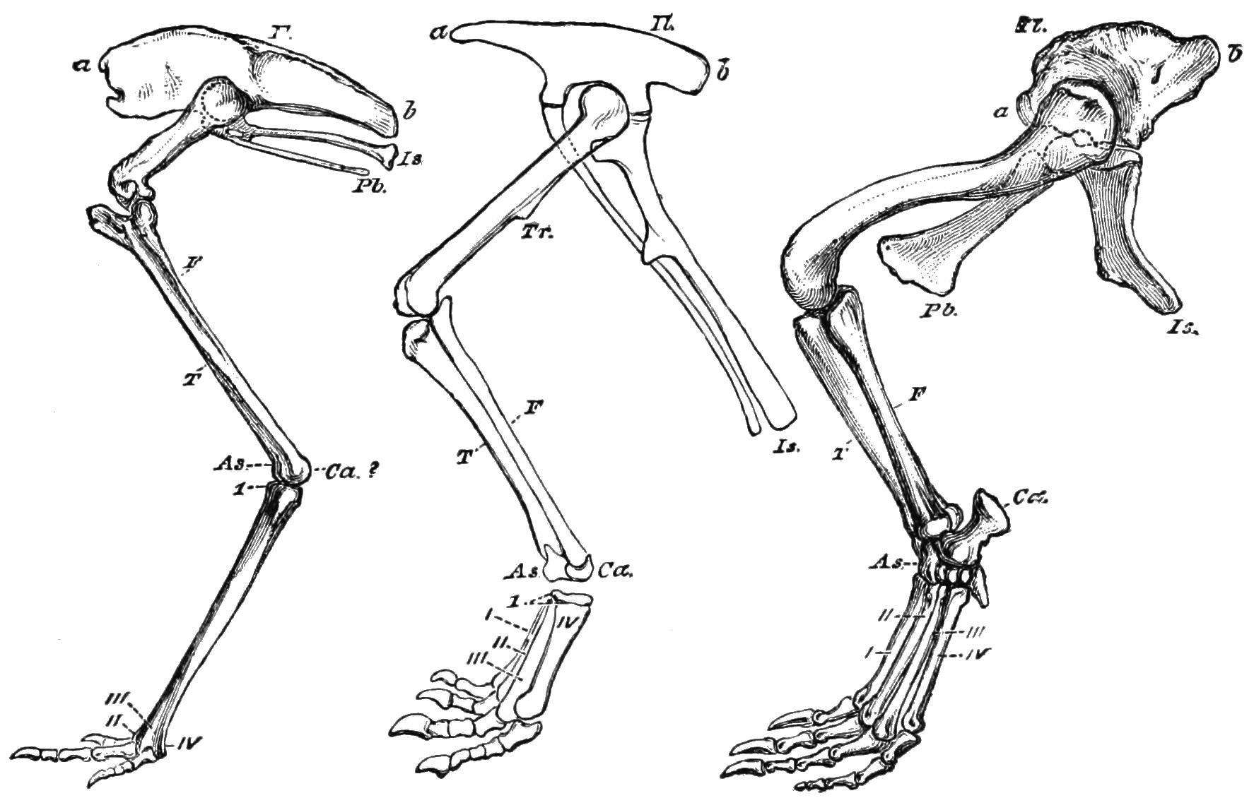9 Best Images Of Printable Dinosaur Bones Foot