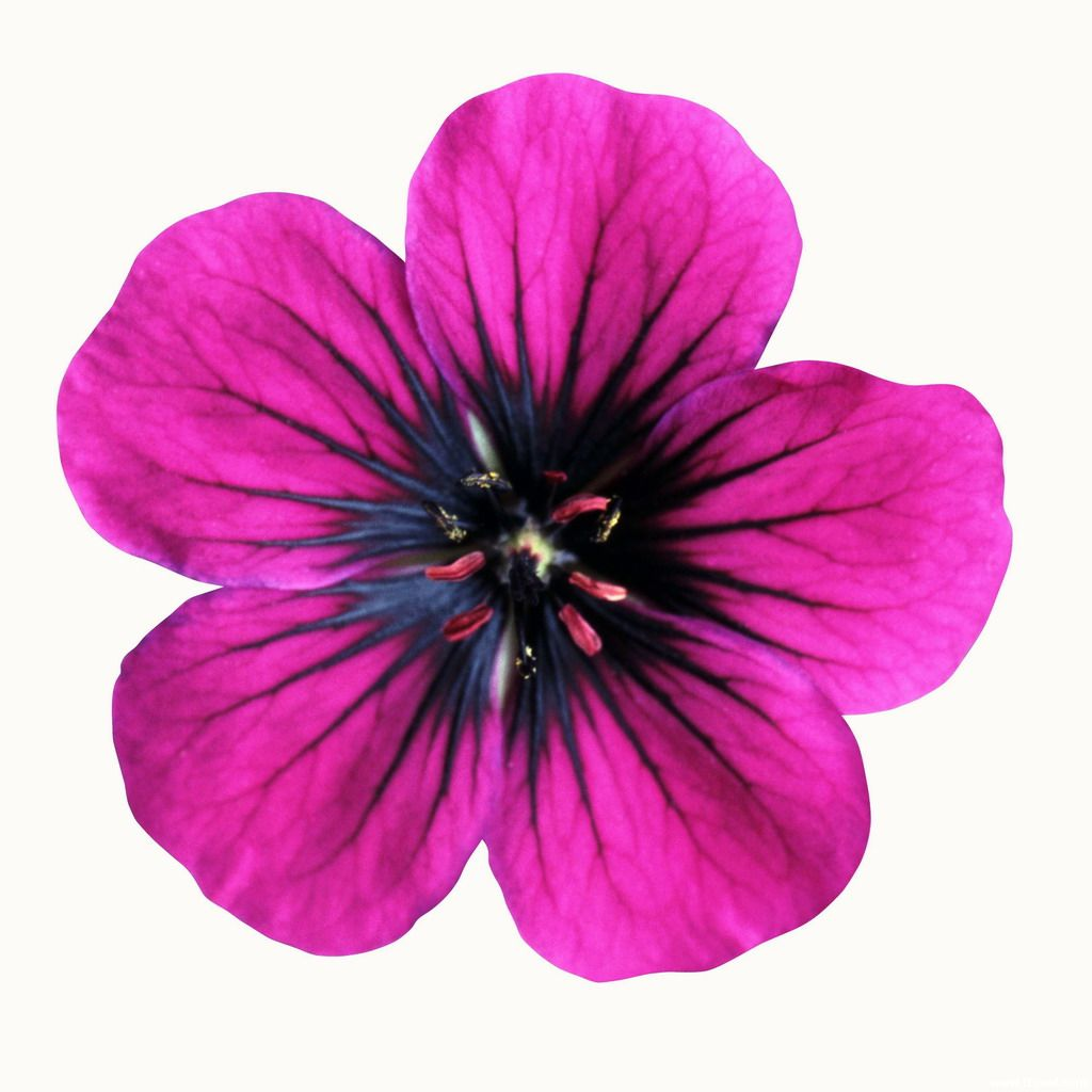 Flower Printable Images Gallery Category Page 1