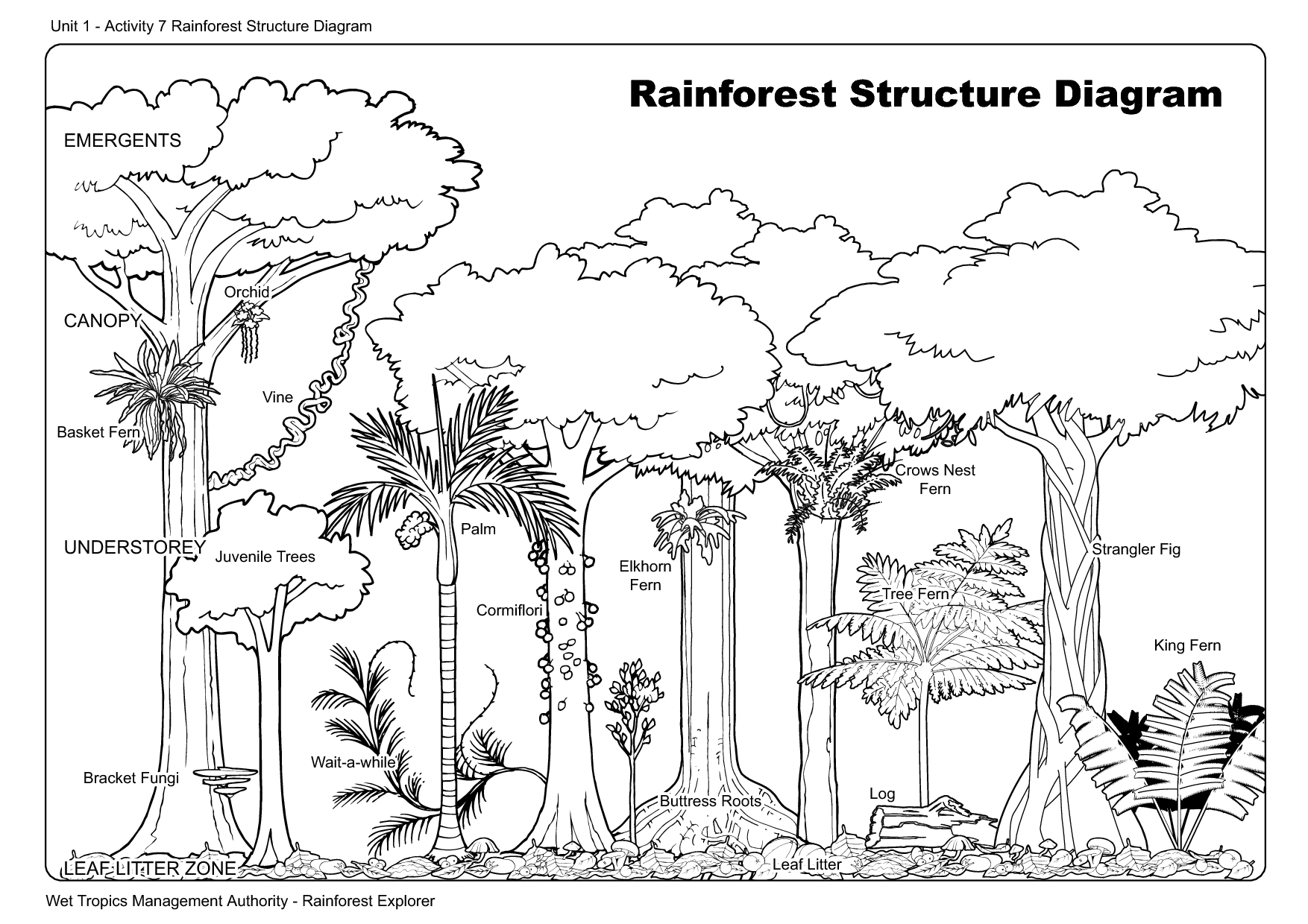 6 Best Images Of Rainforest Printables For First Grade