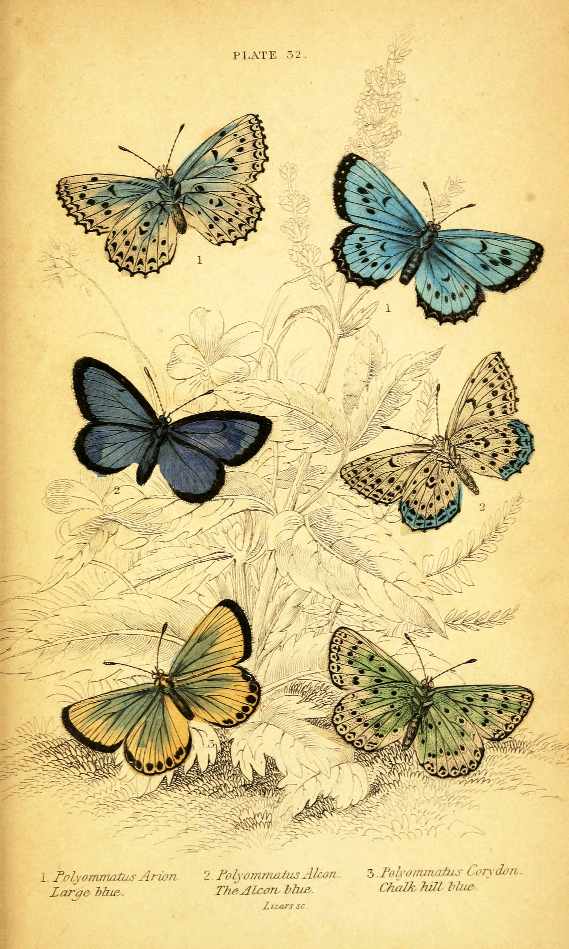 7 Best Images Of Butterfly Prints Free Printables