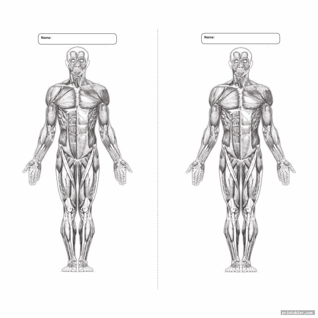 26 Blank Muscle Diagram To Label