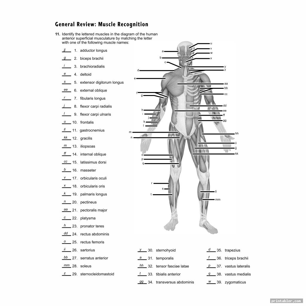 31 Blank Human Body Diagram To Label
