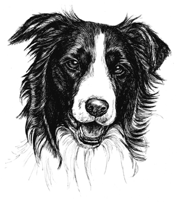 Border Collie Puppy Receipt Book Print By Townsend