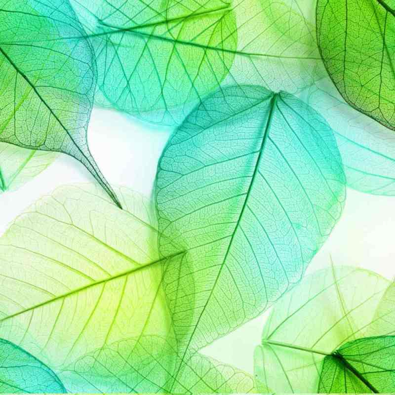 Wall Covering, Tapete Of Seafoam Green Banyan Leaves 2