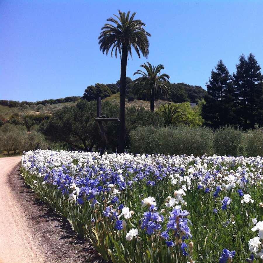 Experience the beauty of McEvoy Ranch