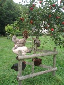 Chucks in Apple Tree