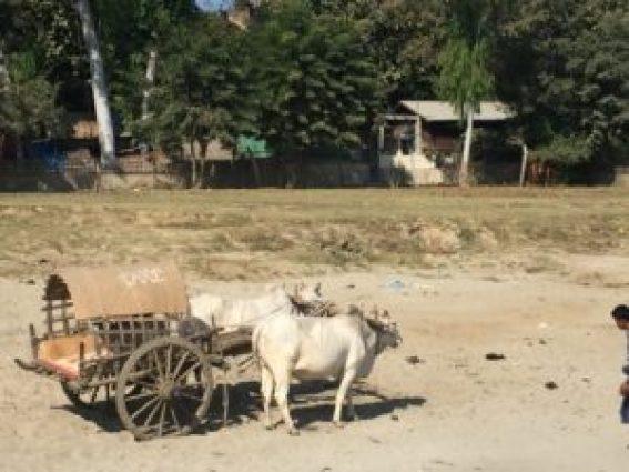 Taxi local en Mingun