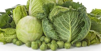 「Cabbage」的圖片搜尋結果