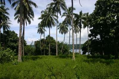 Pilotin Island - Vanuatu, South Pacific - Private Islands ...