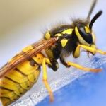 Insect Removal in Oldham