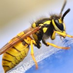 Insect removal in Crumpsall