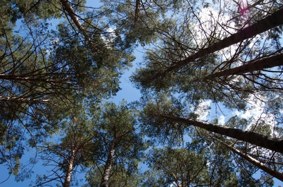Природа в Коблево