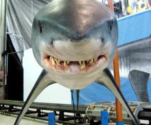 «С акулами жить – по-акульи плыть» или «Увлекательное подводное путешествие Фабьена Кусто»