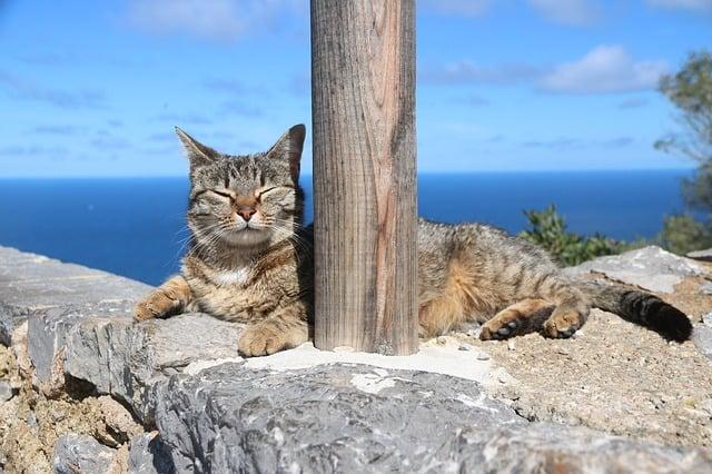 идра остров кошек