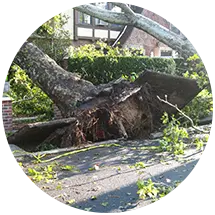 tree removal proarbor tree care services - ProArbor Tree Care