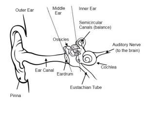 Musician Tips: Hearing Loss  ProAudioLand Musician News