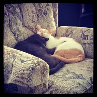 Snuggling Cats