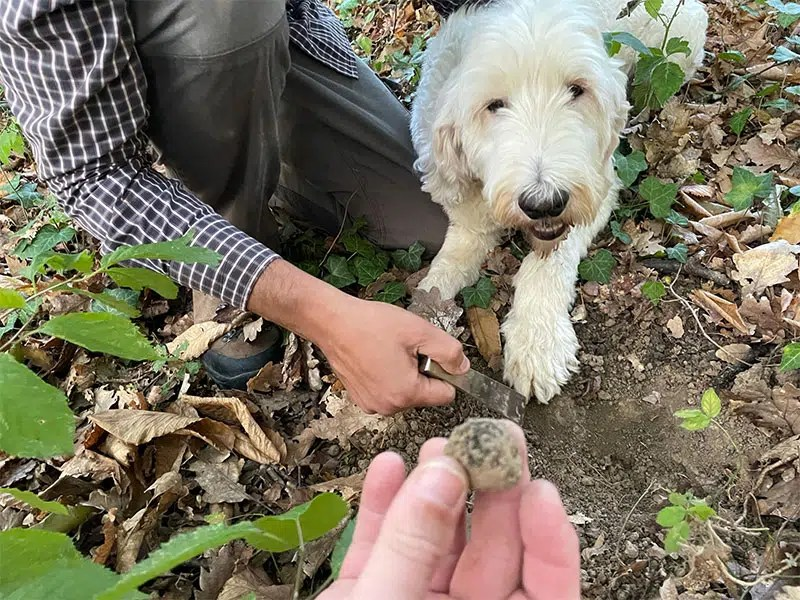 The truffle hunting dog during the tour was super friendly and very good at his job, as we did find the truffles.