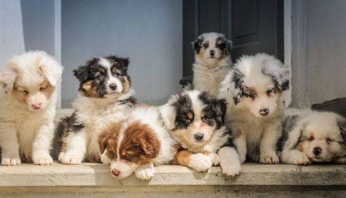 Seguro Saúde Cão e Gato
