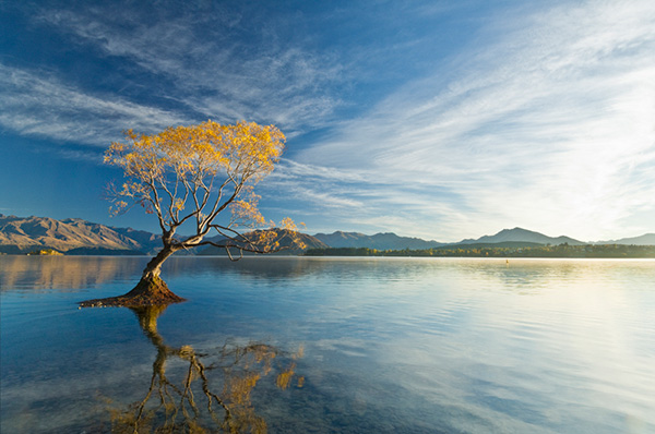 Nz Shooting Video Wallpaper: 3 Steps To Gorgeous Landscape Images