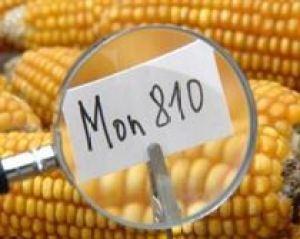 UE a inghetat pana in 2014 aprobarea culturilor modificate genetic
