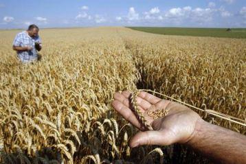 Vedeti aici reglementarile privind impozitarea terenurilor agricole