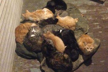 Femeie gasita inghetata si mancata de pisici pe Unirii