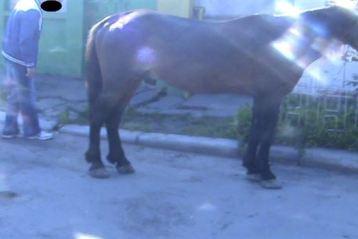Cu calul in buricul targului