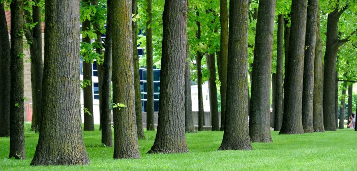 In America, Trees Symbolize Both Freedom and Unfreedom