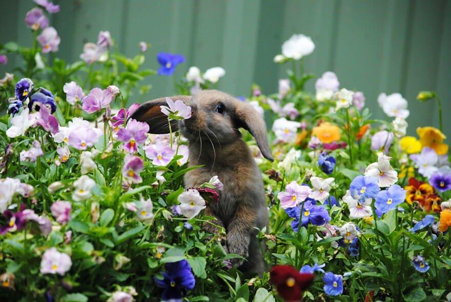 zvirata-privonujici-ke-kvetinam-5