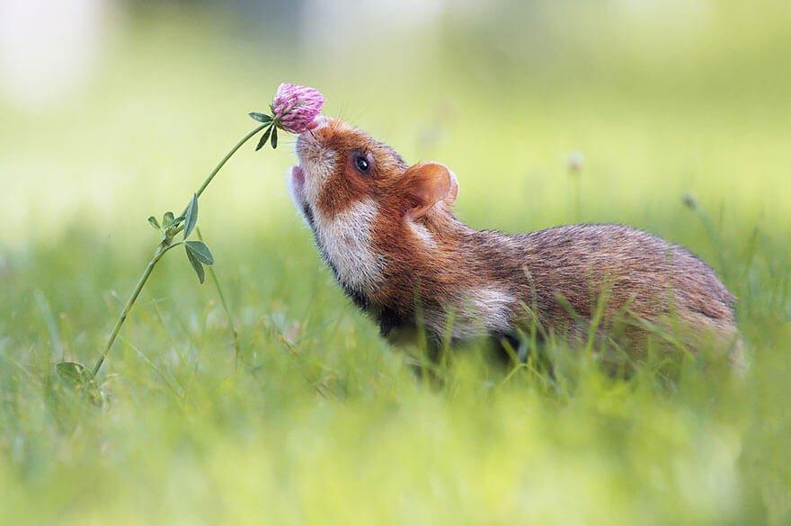 zvirata-privonujici-ke-kvetinam-9