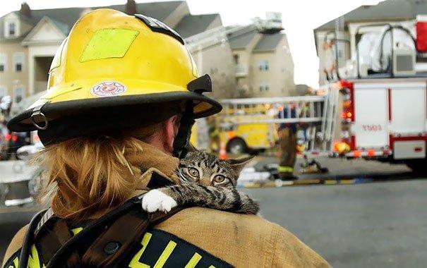 hasici-zachrana-zvirat-2