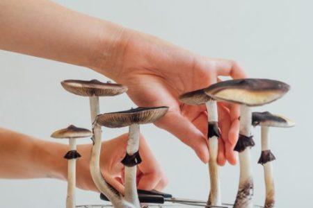 Denver legalizuje houbičky