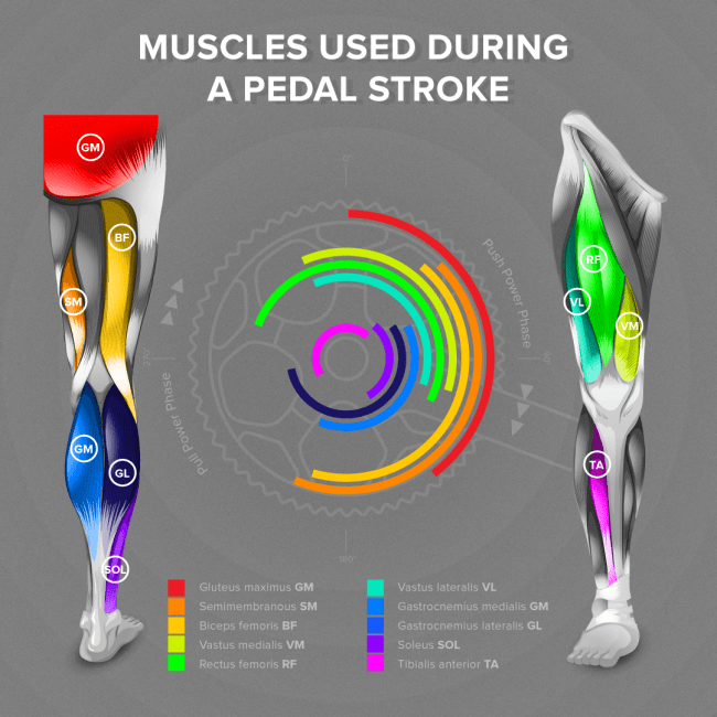 Muscles Used Whilst Cycling