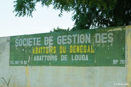 Sénégal-Le commerce de bétail sur pied-Dakar, foyer de consommation du Sénégal-Les abattoirs de Louga
