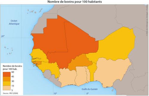Afrique de l'Ouest-Le commerce de bétail sur pied-Les circuits régionaux de commercialisation-Nombre de bovins pour 100 habitants