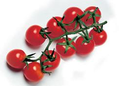 pomodoro ciliegino di pachino