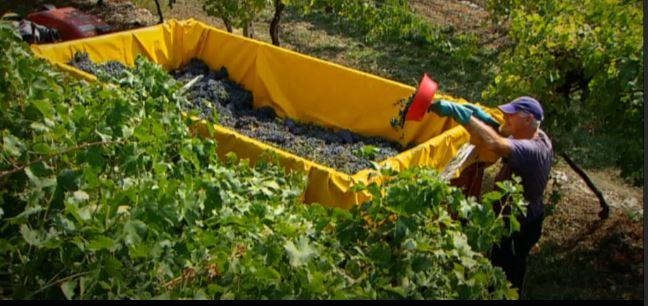 2015-04-07 20_17_36-Video Rai.TV - Signori del vino - Signori del vino del 21_03_2015 - Veneto