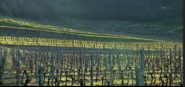 2015-04-07 21_19_52-Video Rai.TV - Signori del vino - Signori del vino del 21_03_2015 - Veneto