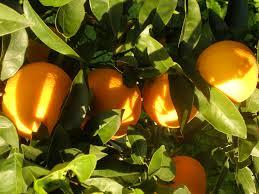 arance-di-ribera