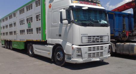 SEPOR incorpora a su programa una jornada específica para transportistas de animales
