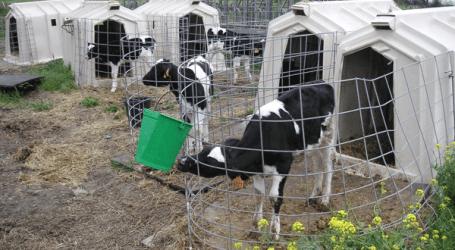Diarreas de etiología parasitaria en terneros
