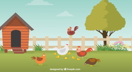¿Son felices las gallinas?